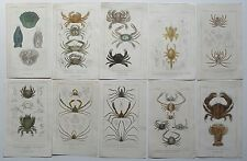 1837 10X GENUINE ANTIQUE CUVIER CRUSTACEA VARIOUS SPECIES TYPES OF CRAB ETC