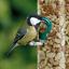 thumbnail 3 - SQUAWK Split Peanuts - Wild Bird Premium Grade Garden Birds Fresh Food Mixture