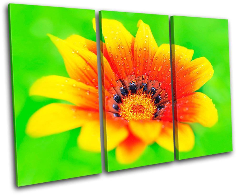 Années et bagues bagues bagues brillantes Flower Flowers Floral TREBLE TOILE murale ART Photo Print 9e957c