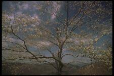 176057 Spring Shenandoah A4 Photo Print