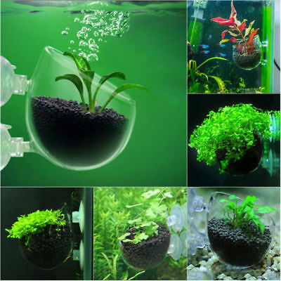 Aquatic Plant Crystal Clear Glass Cup Pot Aquarium Aquascaping Fish Tank Holder Ebay