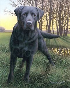 Nigel-Hemming-BLACK-WATCH-Labradors-Labs-Gun-Dog-Fieldsport-Shooting-Art