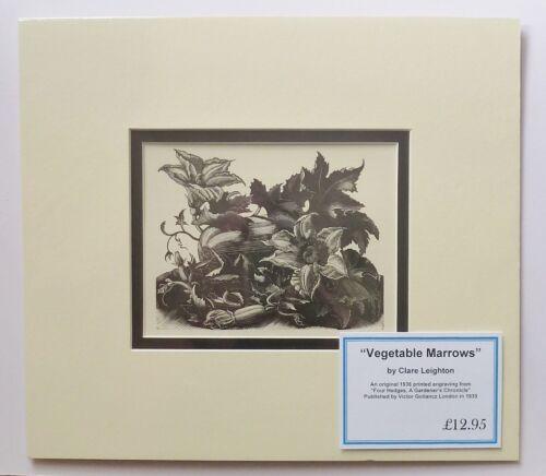 CLARE LEIGHTON Print Vegetable Marrows Orig 1936 Lithograph of original Woodcut