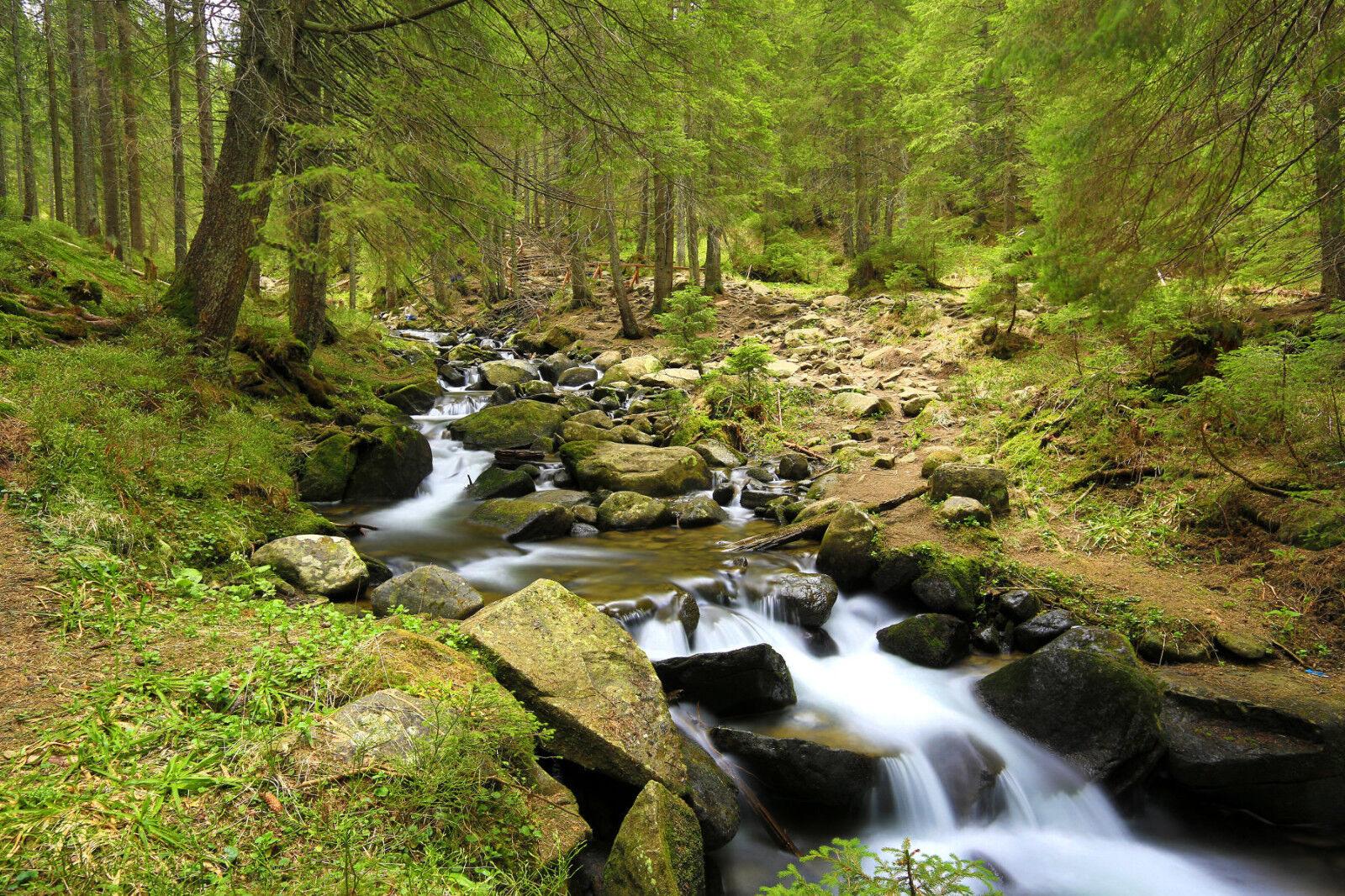 Fototapete-BACH im WALD-(369P)-350x260cm-7 Bahnen 50x260cm-Fluss Steine Bäume