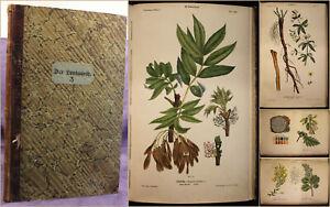 Trentsensky-Der-wissenschaftliche-Spaziergaenger-Der-junge-Landwirth-3-um-1850-sf