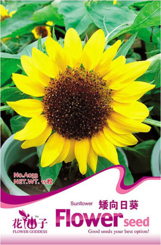 Original Package 20 Helianthus Annus Dwarf Sunflower Flower Garden Seed A033