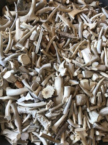 Chunks Grades A B and C Pieces 50 Pounds Deer Antler Scraps
