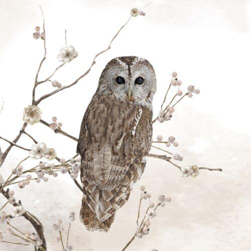 4 x Single Paper Napkins//3 Ply//Decoupage//Craft//Wildlife//Tawny Owl