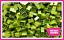 LEGO-Brique-Bundle-25-pieces-Taille-2x2-Choisir-Votre-Couleur miniature 11