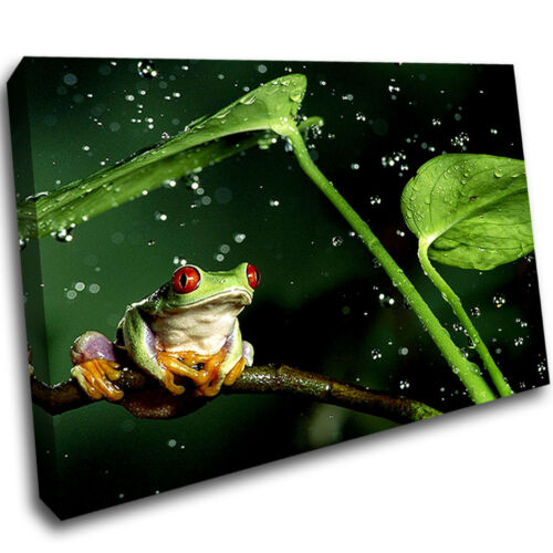 Tree Frog Animal Plant Living Framed Wall Canvas 3D Art Picture Mount Room C271