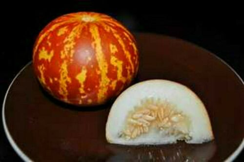 Rare Tigger Melon Seeds THE MOST BEAUTIFUL DELICIOUS MELON YOU WILL EVER GROW!