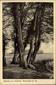Zarrentin-Mecklenburg-Vorpommern-1920-30-Baum-Baeume-See-Wald-Schaale-Schaalsee