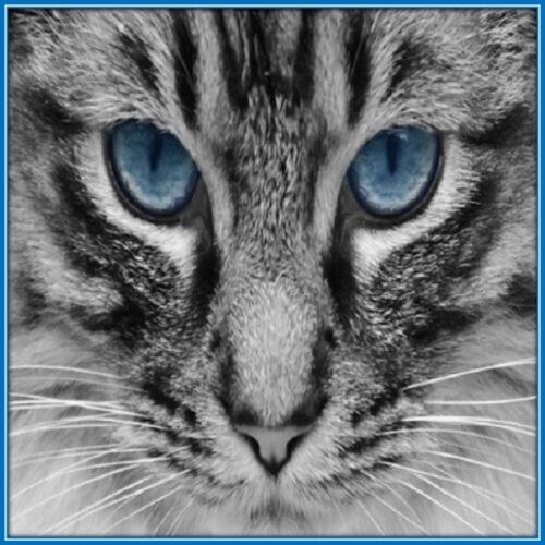 30 Custom Cat Art Personalized Address Labels