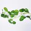 200cm-Ivy-Leaf-Garland-Green-Plant-Plastic-Vine-Foliage-Home-Garden-Decoration thumbnail 12