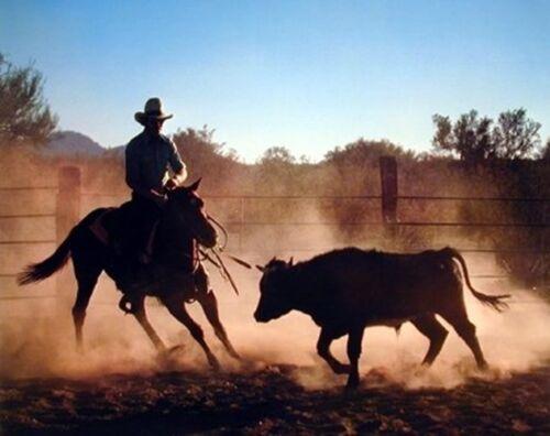 16x20 Wall Decor Western Cowboy on Cutting Wild Horse Animal Bedroom Art Print