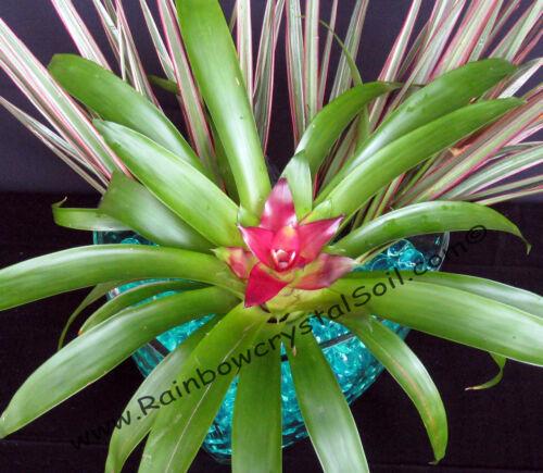 Green 1 LB Water Marbles Crystal Soil Gel Balls Plants Wedding Centerpiece Teal