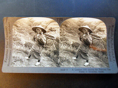 Shizuoka Keystone Stereoview Girl Picking Tea Japan of 10/'s Education Set #530