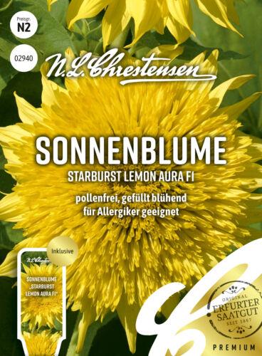 pollenfrei 02940 Sonnenblume Starburst Lemon Aura F1 gefüllt blühend Samen