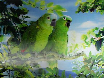 3D Lenticular Poster - Pair of green PARROTS  - 12x16 Print - Wild Birds