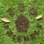 Hemway-Eco-Friendly-Glitter-Biodegradable-Cosmetic-Safe-amp-Craft-1-24-034-100g thumbnail 55