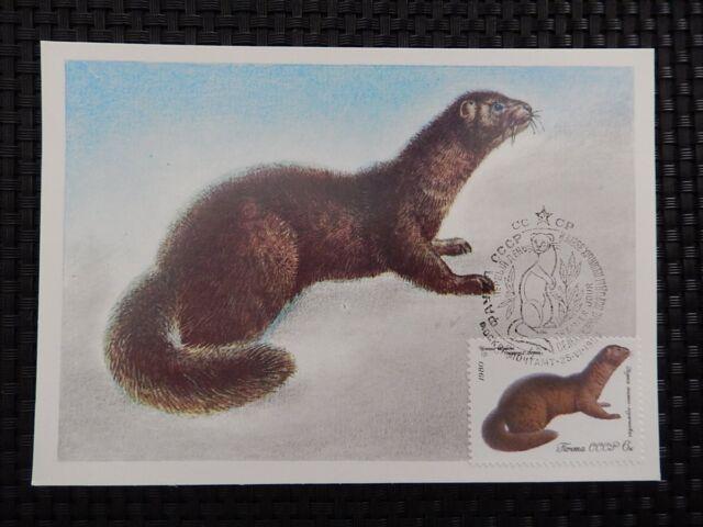 RUSSIA MK PELZTIERE NERZ ANIMALS MAXIMUMKARTE CARTE MAXIMUM CARD MC CM a7637