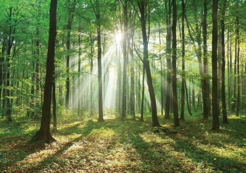 Vließ Fototapete Tapete Wandbild Wald Baum Sonne MS0910329/_VEMVT