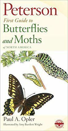 Peterson First Guide to Butterflies and Moths von P...   Buch   Zustand sehr gut