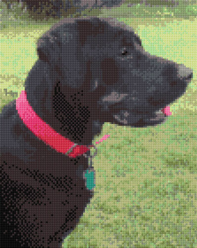 "Cross Stitch Kit 8/"" x 10/"" 14 Count Aida Anchor Labrador Dog in Brown /& Black"