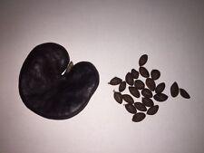 20+ seed Enterolobium cyclocarpum  guanacaste  Elephant Ear Tree monkey