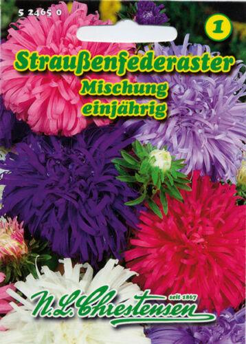 Straußenfederaster,Misch.,Saatgut,Callistephus chinensis,Blume,524650,NLC 1