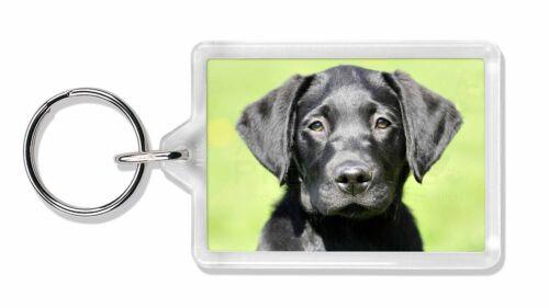 AD-L2K Black Labrador Puppy Photo Keyring Animal Gift