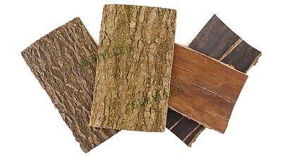 Wild Du Zhong Eucommia Bark Chinese Herbs * Free Shipping