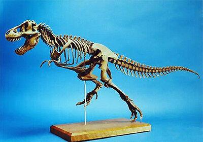 """11""""x 24""""Long T-REX Dinosaur Skeleton Resin Model Kit 1/20"""