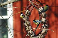 Futterspender Ring Für Meisenknödel Wildvögel Futtersäule Futterautomat Vögel