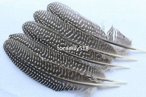 Free shipping beautiful 10-100 PCS 6-8 inch / 15-20 cm natural pheasant feathers