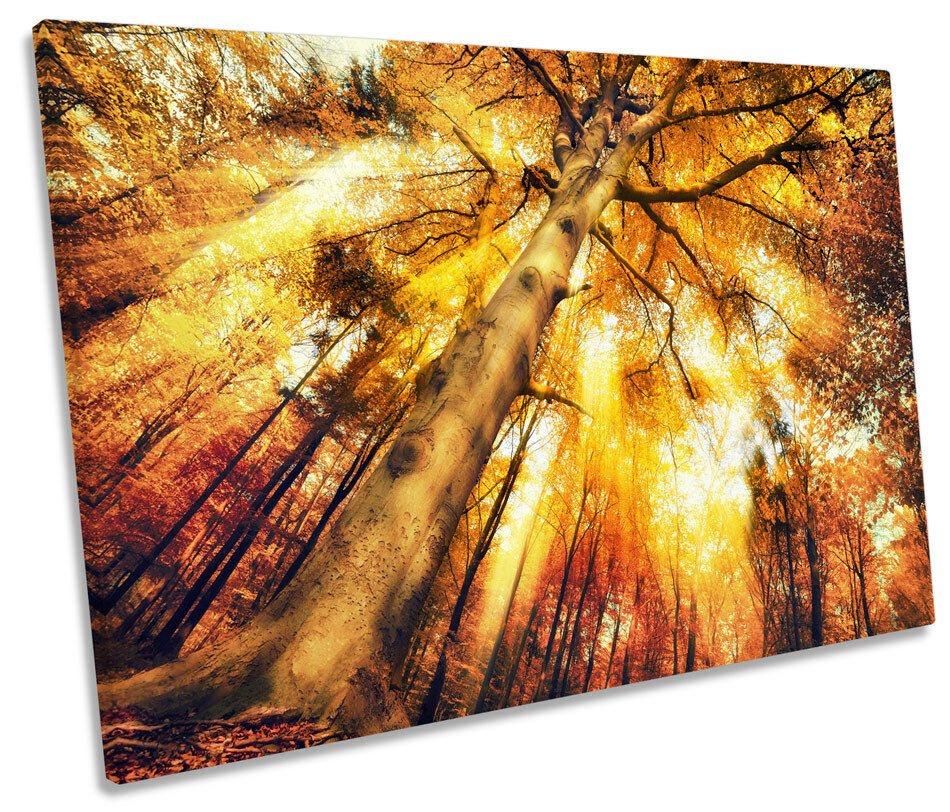 Golden Sunset Tree Tops Bild SINGLE CANVAS Wand Kunst Drucken