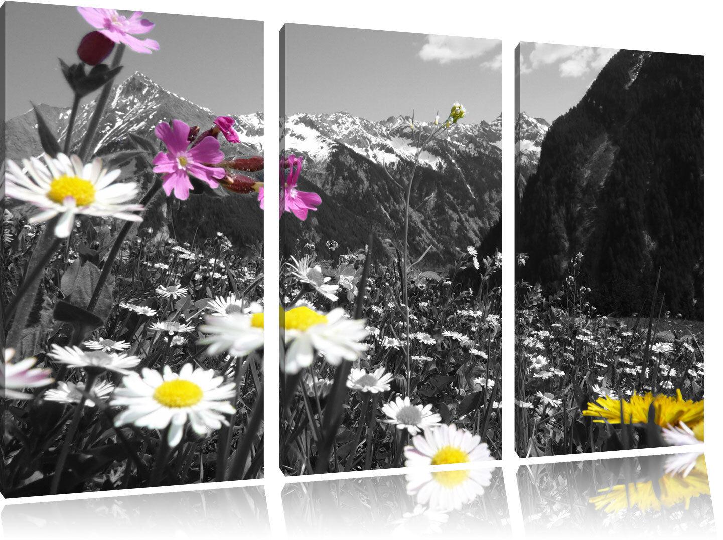 Bella Blumenwiese Nero Bianco su 3-Teiler Quadro su Tel Decorazione Parete