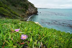 Exot-Pflanzen-Samen-exotische-Saatgut-Zimmerpflanze-Kaktus-i-KARKALLA-i-Exot