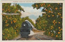 PASSING THROUGH ORANGE GROVE, FLORIDA (USA)