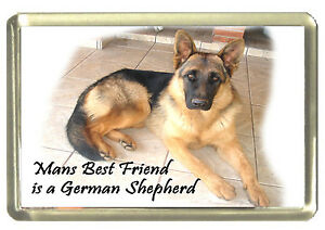 My Best Friend is a Rottweiler Dog Fridge Magnet 7cm by 4.5cm,