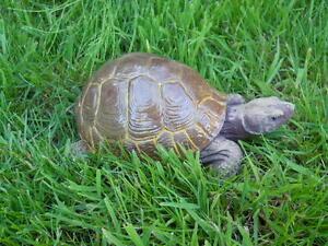 Latex-mould-of-a-tortoise