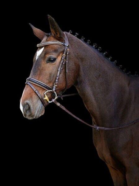 Kerbl 3210490 Trensenzaum komb. Kingston braun Pony Trense englisch komb. Trensenzaum Modell 94ee7c