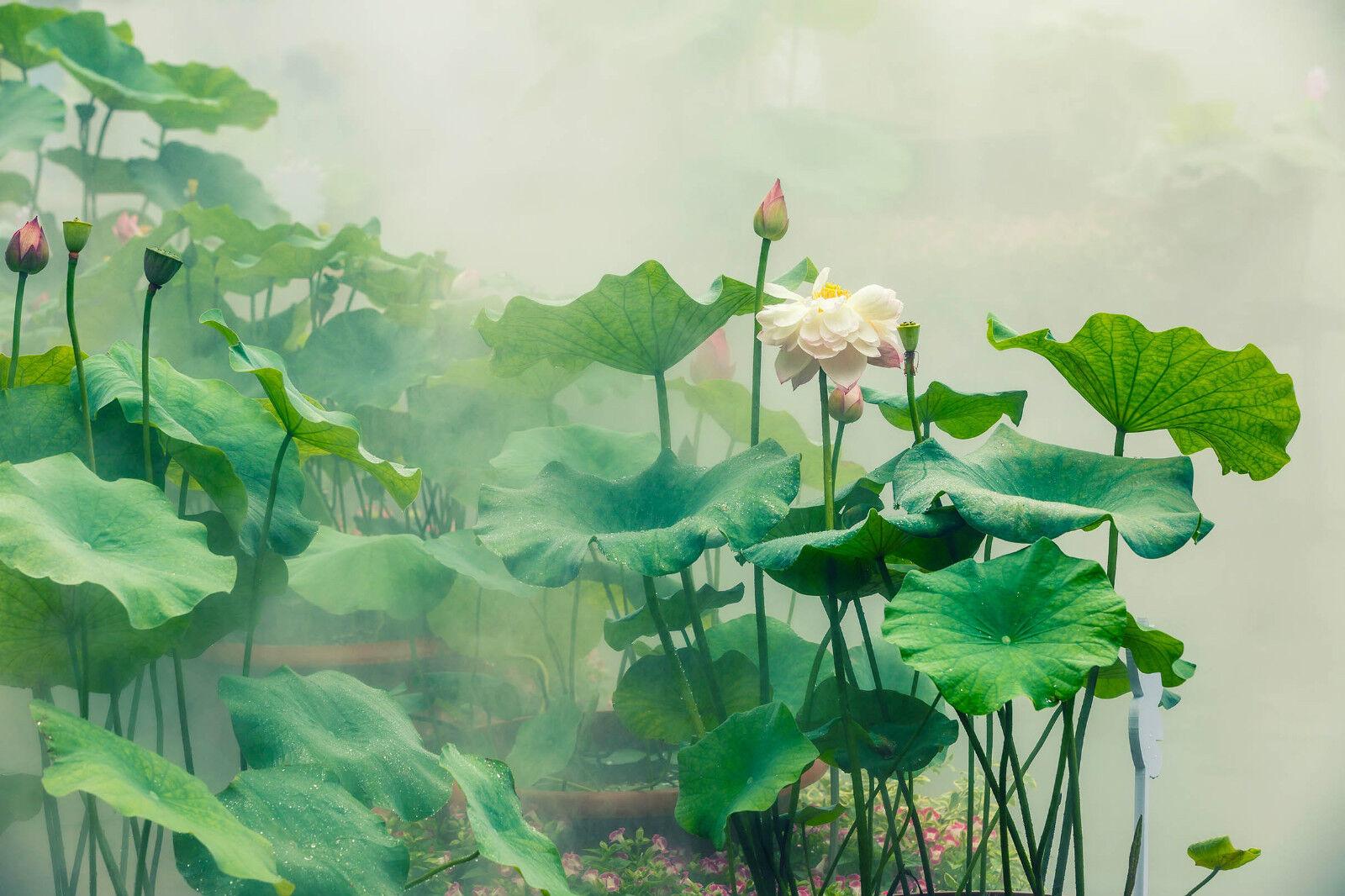 3D Belle Lotus Et Feuille 2 Décor Décor Décor Mural Murale De Mur De Cuisine AJ WALLPAPER FR   Simple D'utilisation  f1eb73