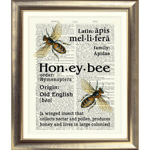 ART-PRINT-ON-ORIGINAL-ANTIQUE-BOOK-PAGE-Vintage-Dictionary-Honey-Bee-Picture