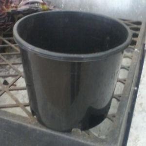 CACTUS-amp-SUCCULENT-FLOWER-POTS-100-for-25-00-140mm-6-034-squat-Pots