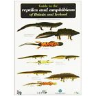 Guide to the Reptiles and Amphibians of Britain and Ireland by Peter Roberts (Sheet map, folded, 1999)