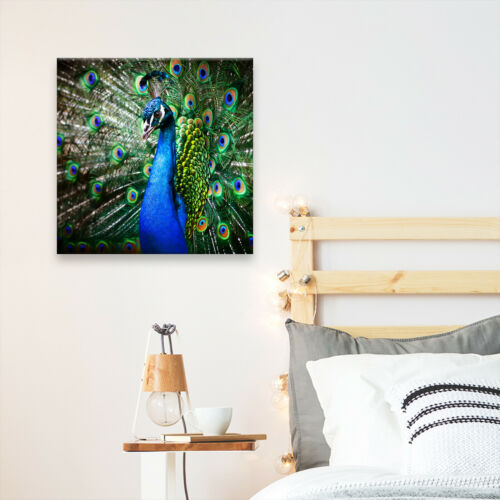 Square Animal Photo Canvas Small Wall Art Picture Prints Blue Peacock Feathers