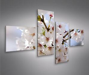 Blossom 4L Bild auf Leinwand Bilder Kunstdruck Wandbild Poster