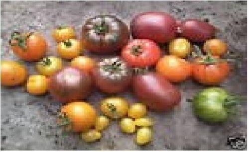 1000 semi-LARGE Verdura-pomodoro-MINIBEL