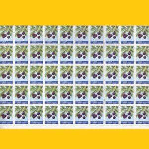 FEUILLE COMPLETE 50 LIBAN - ANNEE 1962 - N° 216 NEUF ** - France - Hauteur de bloc: 5 timbres Qualité: Neuf sans trace de charnire Largeur de bloc: 10 timbres Sujet: Fruits Couleur: Multicolore Type: Feuille Pays de fabrication: Liban Année d'emission: 1962 Devise: Piastre - France